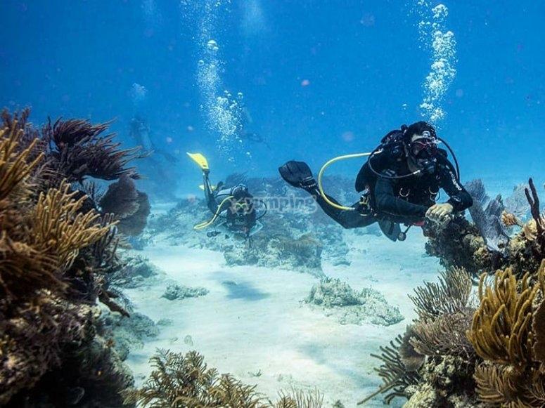 Bucenado por arrecife Mahahual