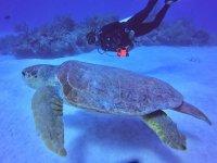 Buceando con tortuga cahuama