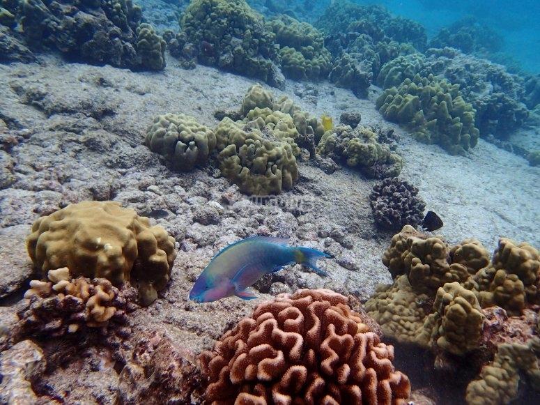 Arrecife visto con snorkel