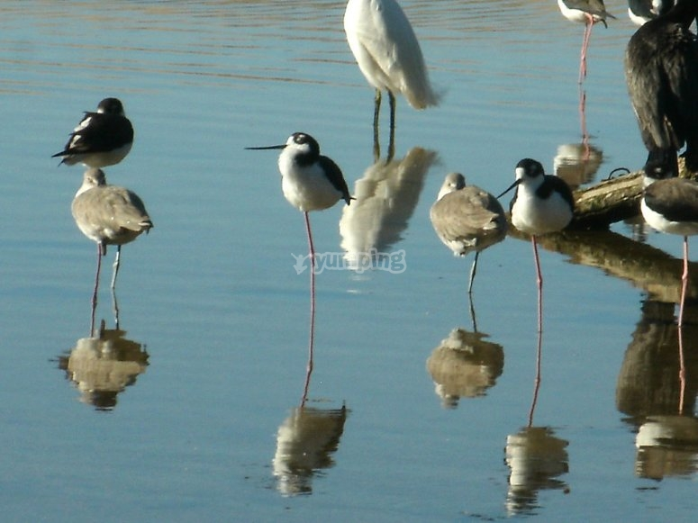Aves migratorias en yelapa