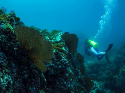 Diving immersion in Marietas Islands for 4 Hours
