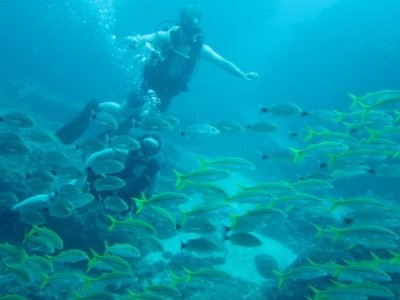 Immersion dive for 4 Hours in Los Anegados