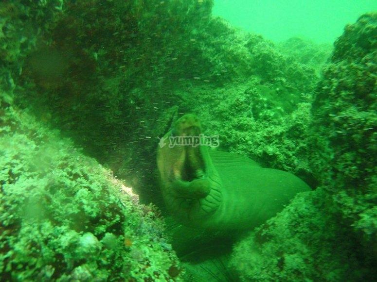 Especies marinas en Nayarit