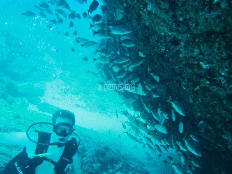 Buceo y peces en yelapa