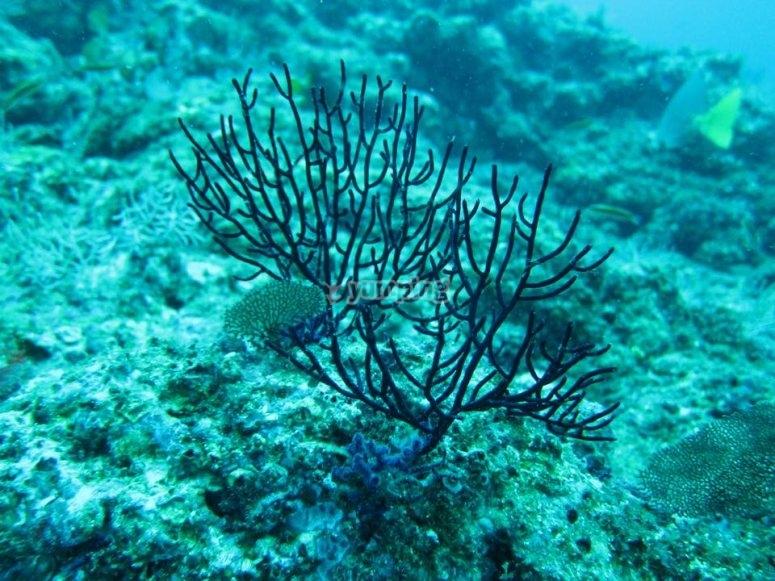Especies de flora marina