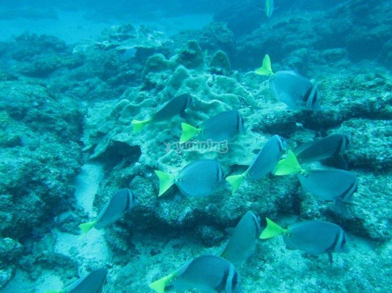 Grupos de peces en Malinal