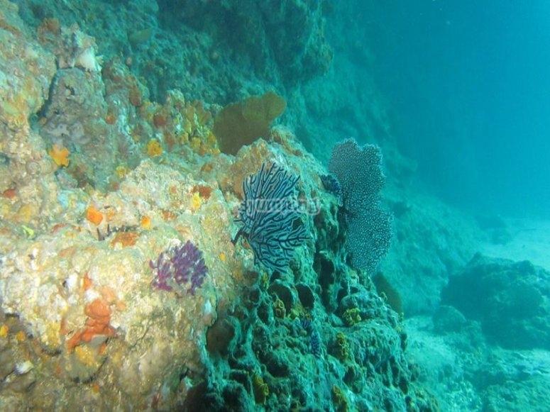 Vida marina cerca de Puerto Vallarta