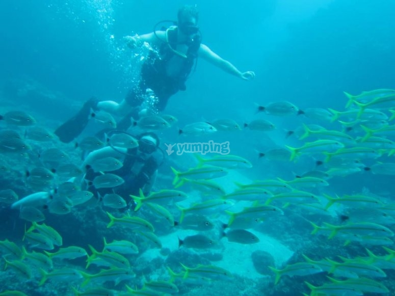 Inmersiones de buceo en Malinal