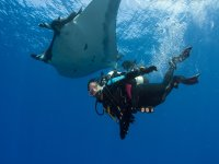 Prepare for see the manta rays