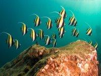 A marine world