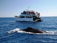 Observacion de ballena