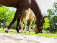 Una ruta a caballo siempre es una experiencia hermosa