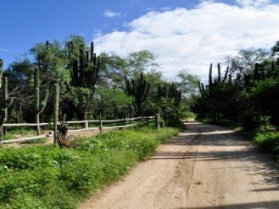 Rancho La Venta Caminata