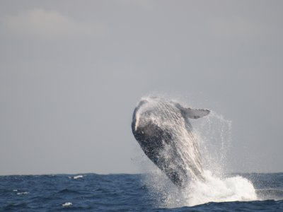 Ecotours de México Whale Watching