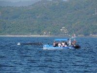 Avistamiento de ballenas en Vallarta