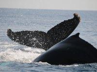Ballenas en Vallarta