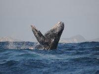 Espectáculo marino en Vallarta