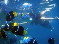 Explorando con snorkel