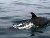 Junto a un espectacular delfín