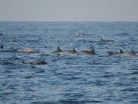 Delfines en manada