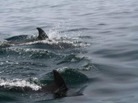 Junto a la pareja de delfines