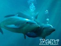 Swim dolphins
