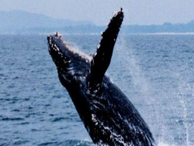 Cruceros Princesa Whale Watching