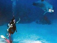 Sumergirte con snorkel