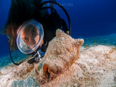 2 Dives for certified divers in Mahahual