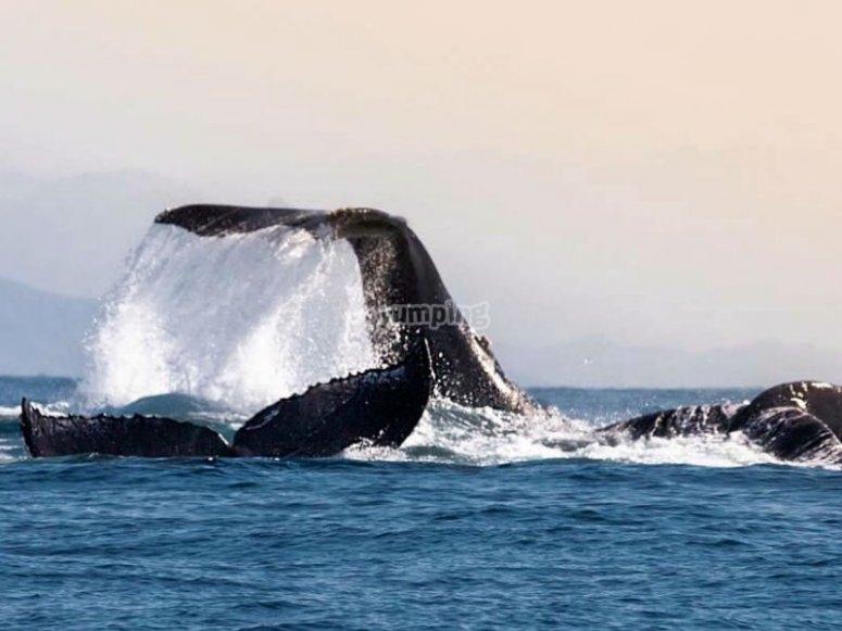 Whale behavior in the ocean