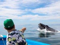 Whale watching in Sinaloa