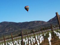 Shared balloon flight and Wine Route in Ensenada