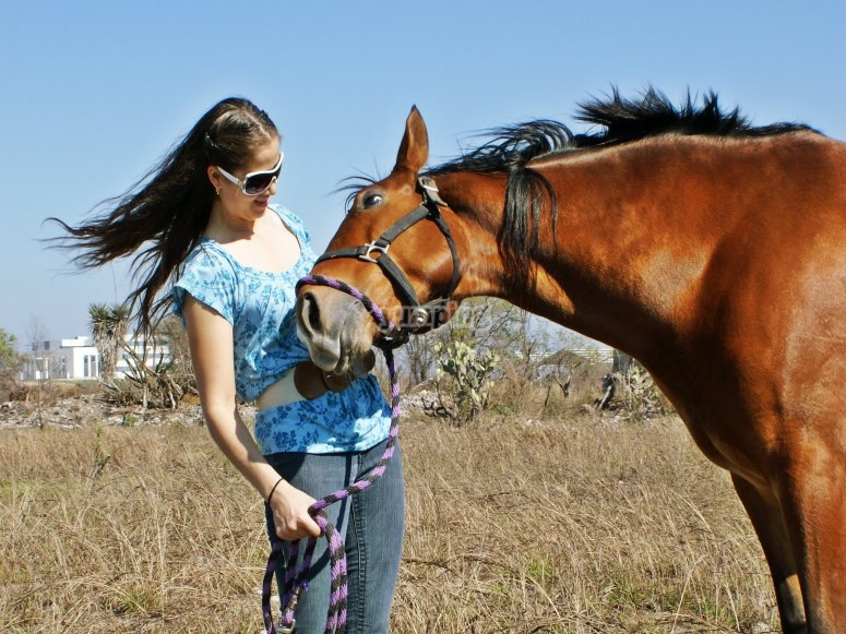 Living with beautiful horse