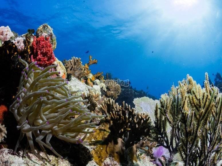 Arrecife en Playa