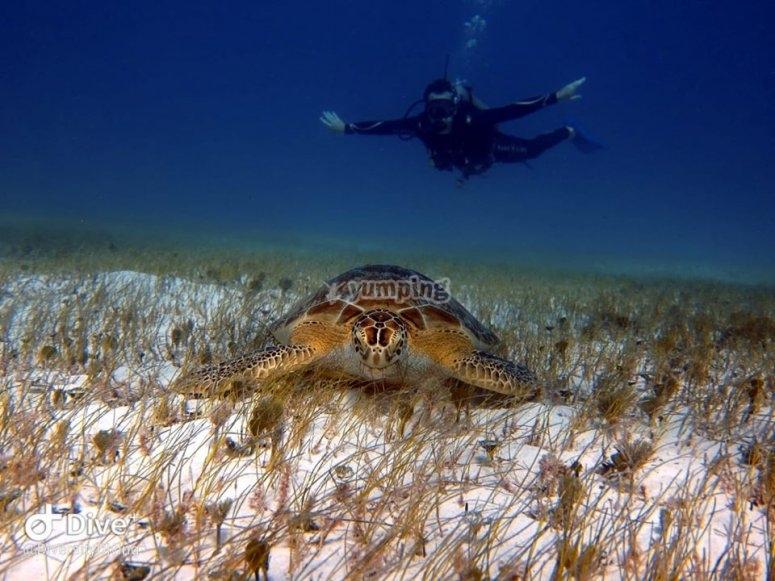 Visitando tortugas en los arrecifes