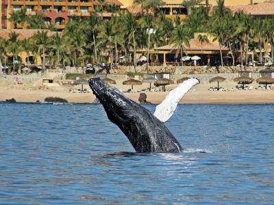 Avistamiento de Ballenas en Los Cabos 2 horas