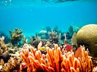 Spectacular reefs
