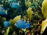 Fish in your habitat