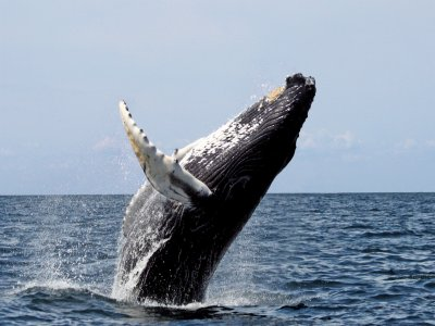 Whale Watching for children Los Cabos 2h