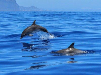 Pesca Maya Nado con Delfines