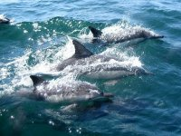 Free dolphins
