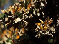 Santuario mariposas monarca