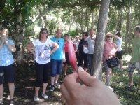 Trekking en cenotes en Champotón por 3 horas