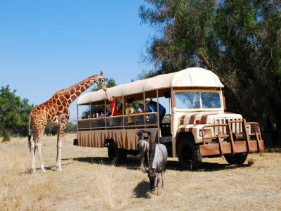 Reino Animal Safaris