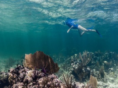 Snorkeling in Xcalak Reef Park for 2 hours