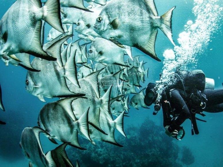 Hermosos peces gigantes