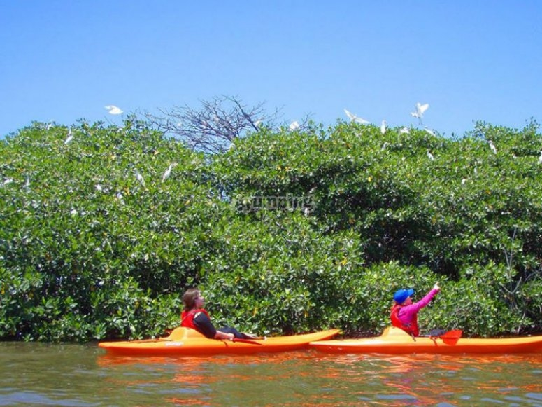 Ubicando aves en kayak
