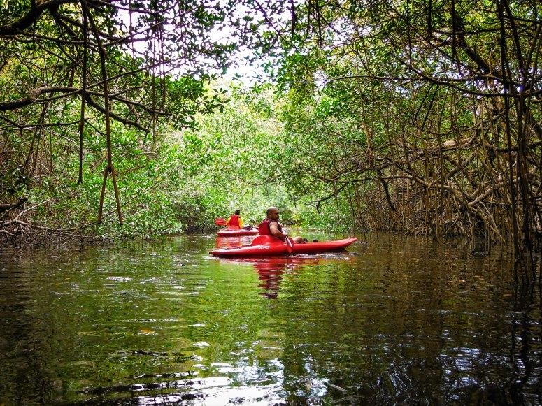 Kayak entre manglar