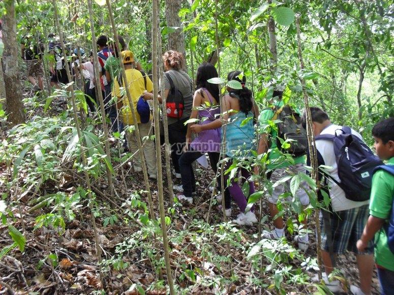 Trekking in Campeche
