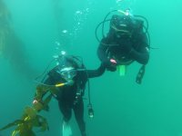 Guided diving for certificates in Ensenada 6 hours